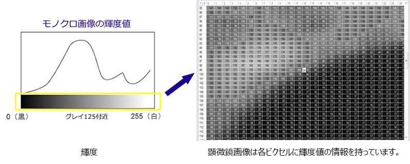 2次元画像解析   画像解析の基礎2